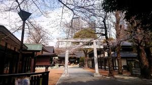 2021.3.19桜1