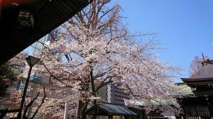 2021.3.24桜1