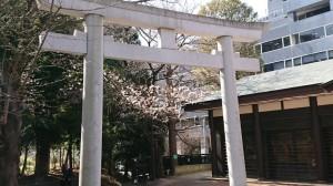 DSC_0103桜