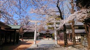 2021.3.24桜2