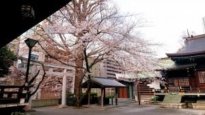 2021.3.22桜2